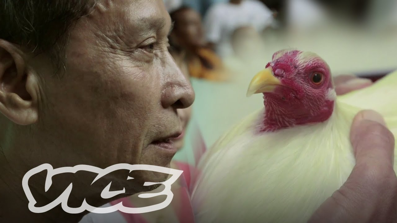 The Billion Dollar Cockfighting Industry: VICE INTL (Australia)