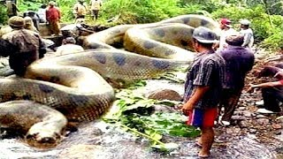 8 Deadliest Amazon River Snakes