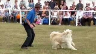 K9 Freestyle Dog Dancing Display Team
