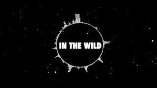 In The Wild - Capital Kings (Lyric Video) HD