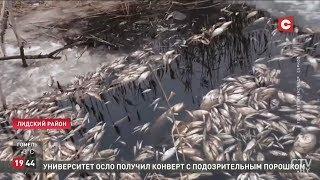 Массовый мор рыбы. Зима 2019. Лида. Лидский район. Беларусь