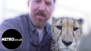 Man reunited with cheetah after a year apart | Metro.co.uk