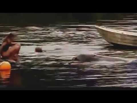 The Amazing Bottlenose Dolphin   National Geographic Documentary