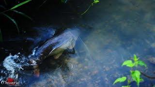 Pêche de la Carpe à Chemillé sur Indrois