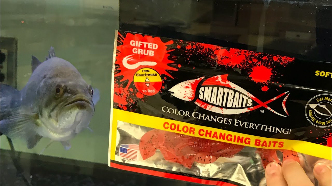 Do Smart Baits Color Changing Baits really work??? (Vs. Bass) - YouTube
