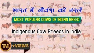 Indigenous Cow Breeds in India | Most Popular Cows Of Indian Breed  | भारत में गौवंश की नस्लें