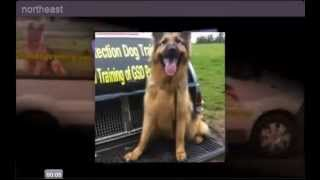 Protection Dog Training North West