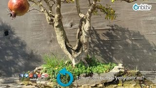 Tohumdan bonsai yetiştirilir mi?