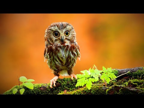 Funny Owls 🦉😂 Cute and Funny Owls Playing (Full) [Funny Pets]