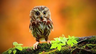 Funny Owls  Cute and Funny Owls Playing (Full) [Funny Pets]