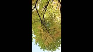 목동 파라곤 가을 단풍 산책 stroll paragon…