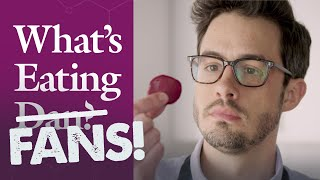 What's Eating FANS: Dan Responds to All Your Questions About Beets