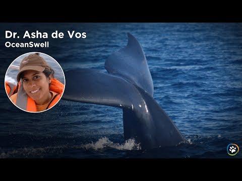 WCN Fall Expo 2017 - Dr.Asha de Vos Blue Whales