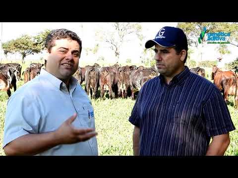 Entrevista Fabio e Flavio Sandim - 5º Leilão Gir e Girolando