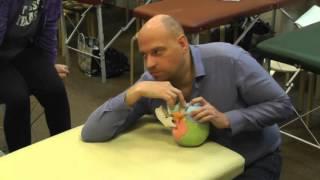 Краниосакральная остеопатия – демонстрация частных техник на черепе от А Смирнова. Часть 2