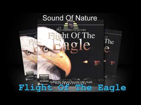 Relaxing Sounds Of Nature  - Flight Of The Eagle   (Full Album)