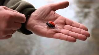 Salmo Lil'Bug
