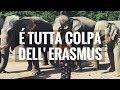 Download É COLPA DELL'ERASMUS SE SONO DIVENTATA COSI!