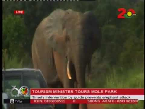 Timely intervention by guide saved Tourism Minister from elephant attack  @ Mole Park