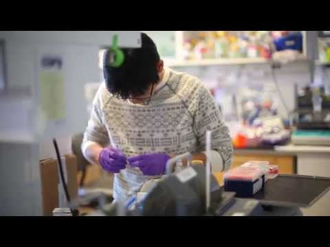 The Stem Cell Biology Program at Johns Hopkins' Institute for Cell Engineering