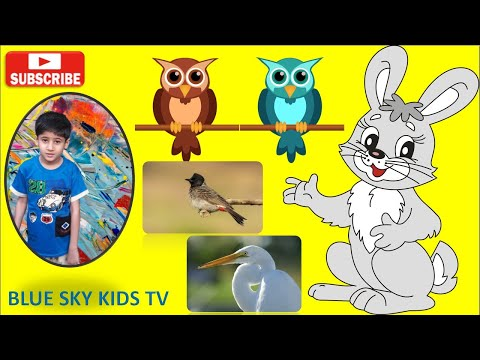 Birds Name for Kids | Preschool | Learn about birds| Different types of Birds