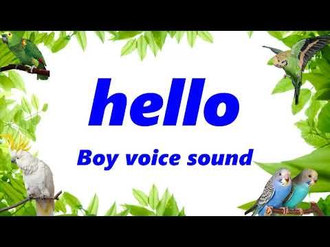 """hello"" boy, child sound parrot how to training parrot and Budgerigar Easy talking training"