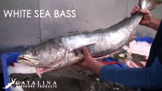 Catalina Offshore Products - June Fish