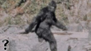 Is The Big Foot Real?