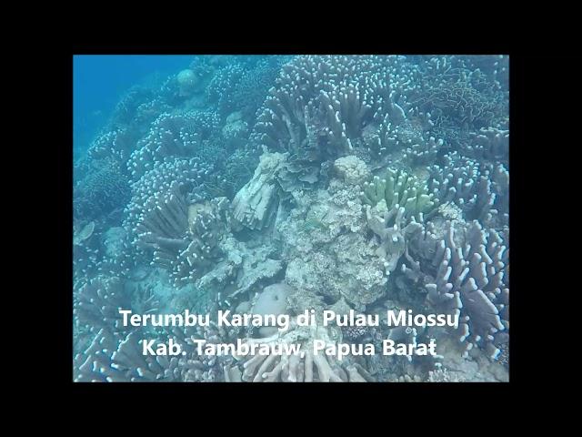 Keindahan Terumbu karang di pulau terluar Miossu kab. Tambrauw, Papua Barat