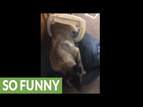 Dog busted for getting into the trash