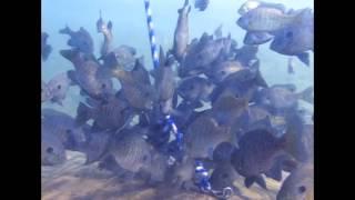 Haigh Scuba Diving Quarry