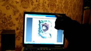 кошки в контакте