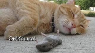 Фильм 1  Кошки рыжие