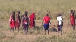 Дикая природа Африки | Живая Природа |