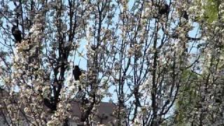 весна Сакраменто