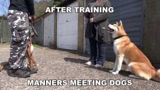 Billy - Boxer - On Lead Dog Aggression - 21 Day Dog Boot Camp With Adolescent Dogs Uk