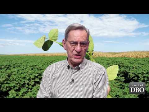 Agro DBO de julho: guerra total à ferrugem da soja