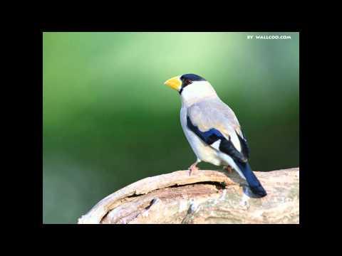 Herbie Mann - Bird Walk