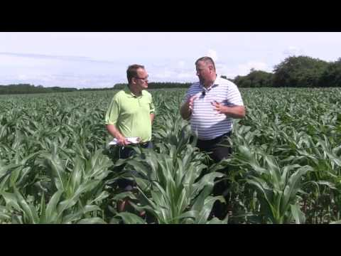 Corn School - Fungicide Timing 2017