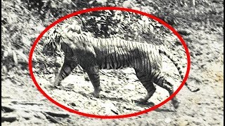 5 extinct animals caught on camera. in this video we take a look at over the years many have gone extinct. but th...
