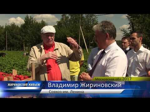 ВВЖ сбор клубники в совхозе им.Ленина
