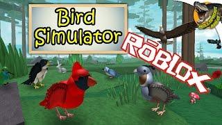 FLY FREE AS A BIRD Bird Simulator (Roblox) PI Gameplay English