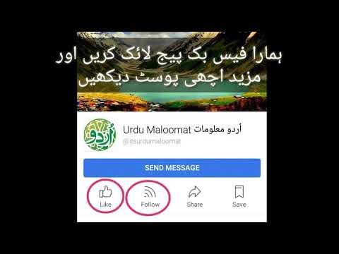 Shahmeer Amir pakistani bug bounty Hunter worlds best Hacker by Urdu maloomat