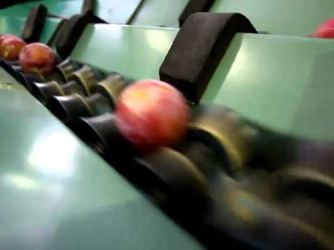 Banhoek Fruit Packers