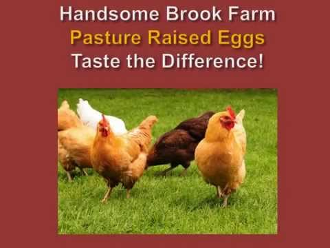 Handsome Brook Farm PASTURE RAISED Eggs