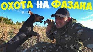 Охота на фазана с Бобби! Готовлю фазана на гриле!!!
