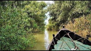 Украинская Венеция. Звуки реки, воды, лягушек.