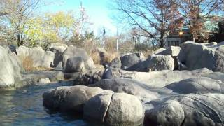 A day at the Bronx  Zoo - New York City