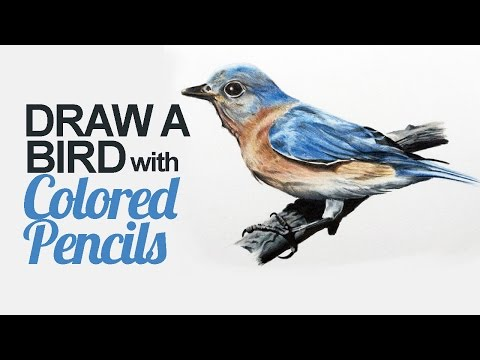 How to Draw a Bird with Colored Pencils