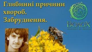 видео kiyevlyanka.info